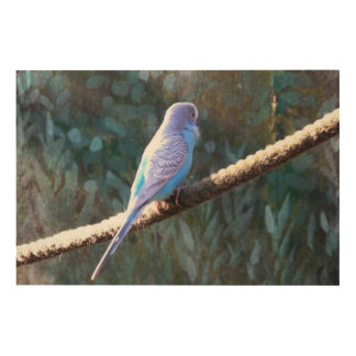 Blue Budgie Wood Canvas