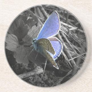 blue buttefly coaster