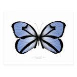 Blue Butterfly 5 Giant Blue Vane Postcard