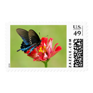 Blue butterfly and red flower postage
