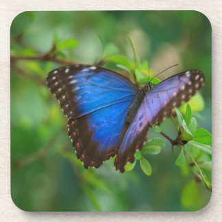 Blue Butterfly Beverage Coaster