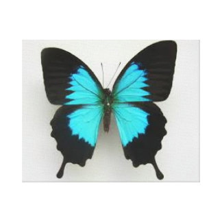 Blue Butterfly Canvas Picture