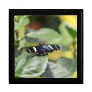 Blue Butterfly Fly Away Keepsake Box