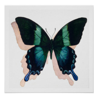 """Blue Butterfly"" Insect Watercolor Art Poster"