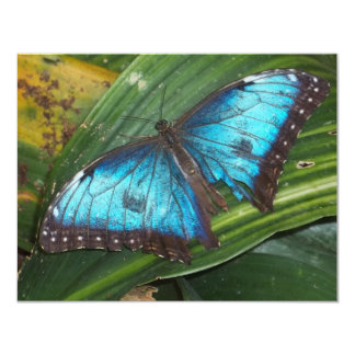 Blue Butterfly Invite