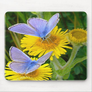 BLUE BUTTERFLY ~ Mousepad # 2