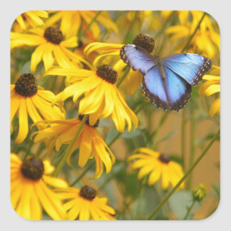 Blue Butterfly on Yellow Flowers Square Sticker