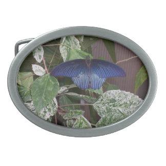 Blue Butterfly Photo Oval Belt Buckle