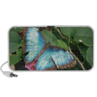 Blue Butterfly Photo Doodle Notebook Speakers