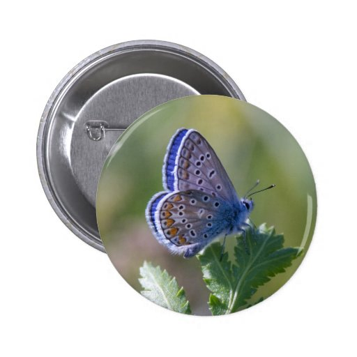 blue butterfly pins