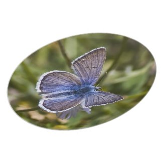 Blue Butterfly Plate plate