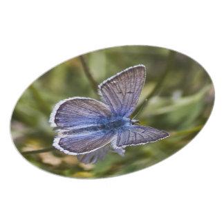 Blue Butterfly Plate