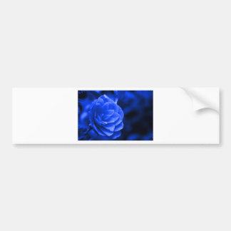 blue camelia bumper sticker