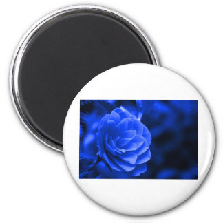 blue camelia fridge magnets