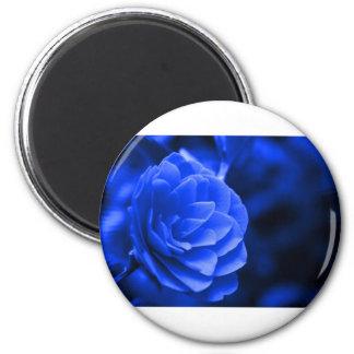 blue camelia refrigerator magnet