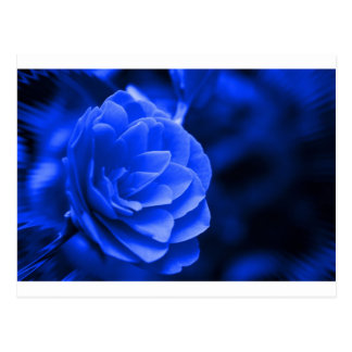 blue camelia postcard
