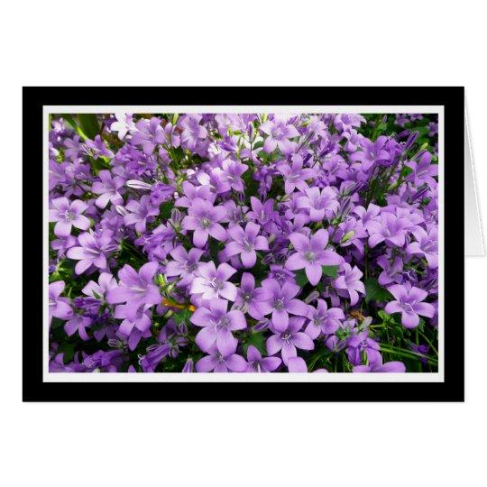 blue campanula flowers card