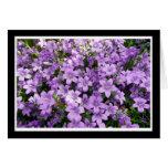 blue campanula flowers greeting card