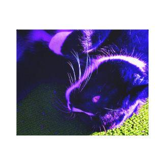 blue cat on side pop art feline animal image canvas print