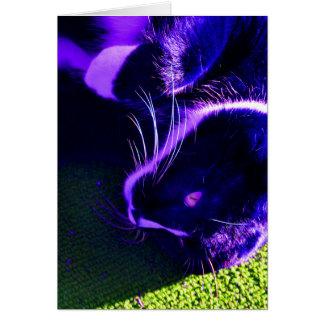 blue cat on side pop art feline animal image card