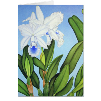 Blue Cattleya Orchids Greeting Card