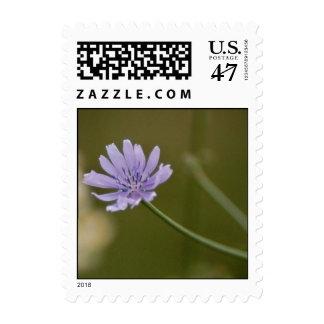 Blue Charm Postage Stamp