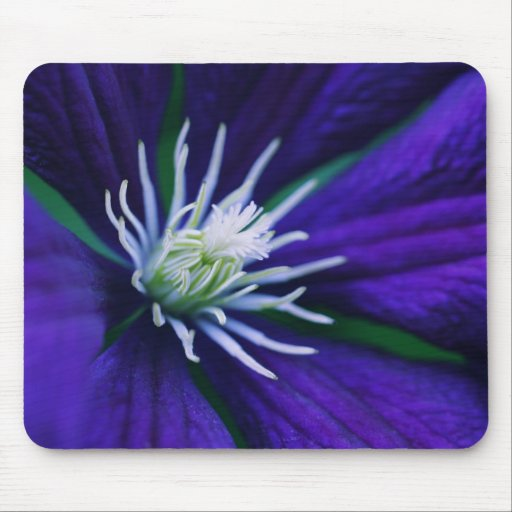 Blue Clematis macro Mouse Pad