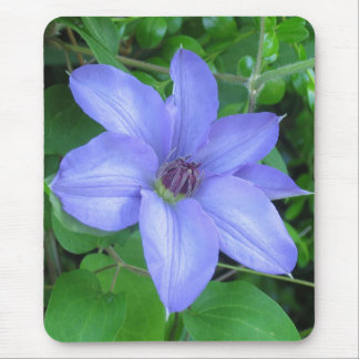 Blue Clematis Mouse Pad