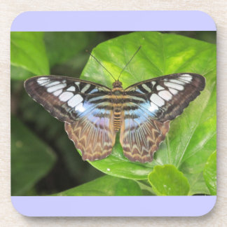 Blue Clipper Butterfly Coasters