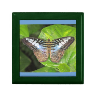 Blue Clipper Butterfly Gift Box