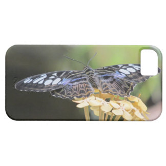 Blue Clipper Butterfly iPhone Case