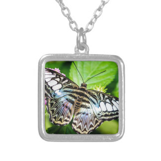 Blue Clipper Butterfly Necklace