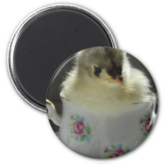 Blue Cochin Chick in Teacup Fridge Magnet