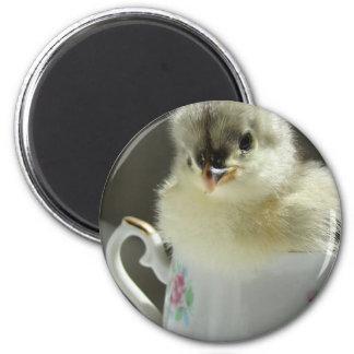 Blue Cochin Chick Refrigerator Magnets