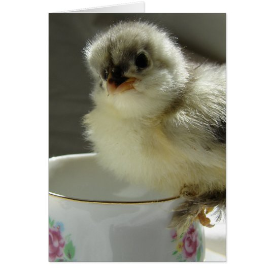 Blue Cochin Chick on Teacup Card