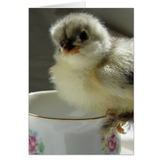 Blue Cochin Chick on Teacup, Easter Greeting Card