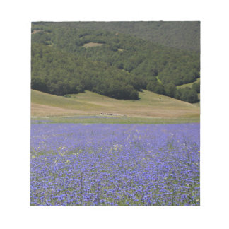 Blue colored fields with cornflowers notepad