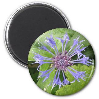 Blue Cornflower Magnet
