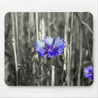 Blue cornflower mouse pad