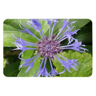 Blue Cornflower Premium Magnet