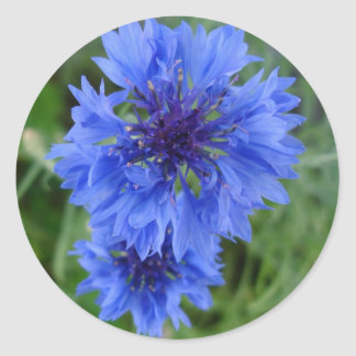 Blue Cornflower Sticker