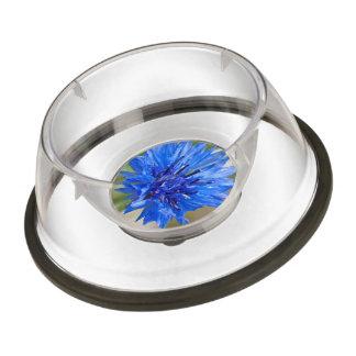 Blue Cornflower Pet Bowl