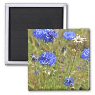 Blue Cornflowers 2 Inch Square Magnet