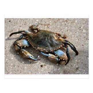 Blue Crab Crawling Postcard