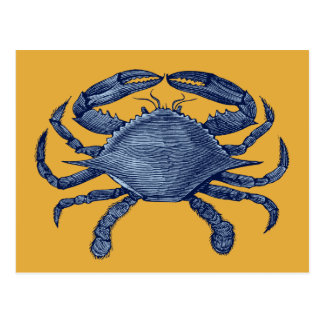 Blue crab postcard