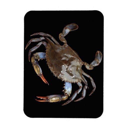 Blue Crab Rectangular Photo Magnet