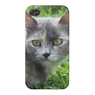 Blue Cream -Tortie Kitty iPhone 4 Case