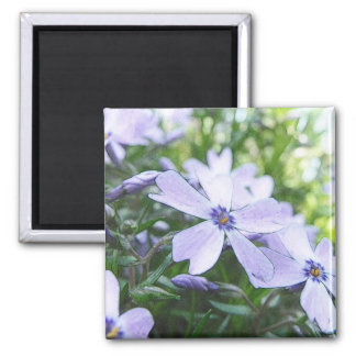 Blue Creeping Phlox Up Close Magnet