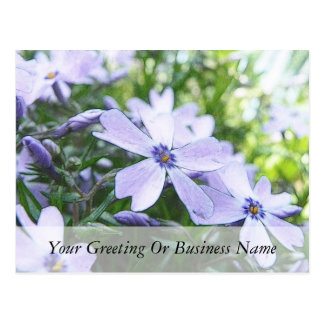 Blue Creeping Phlox Up Close Postcard