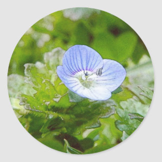 Blue Creeping Speedwell Blooms Classic Round Sticker
